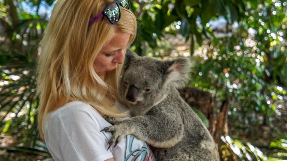 Przytulić koalę