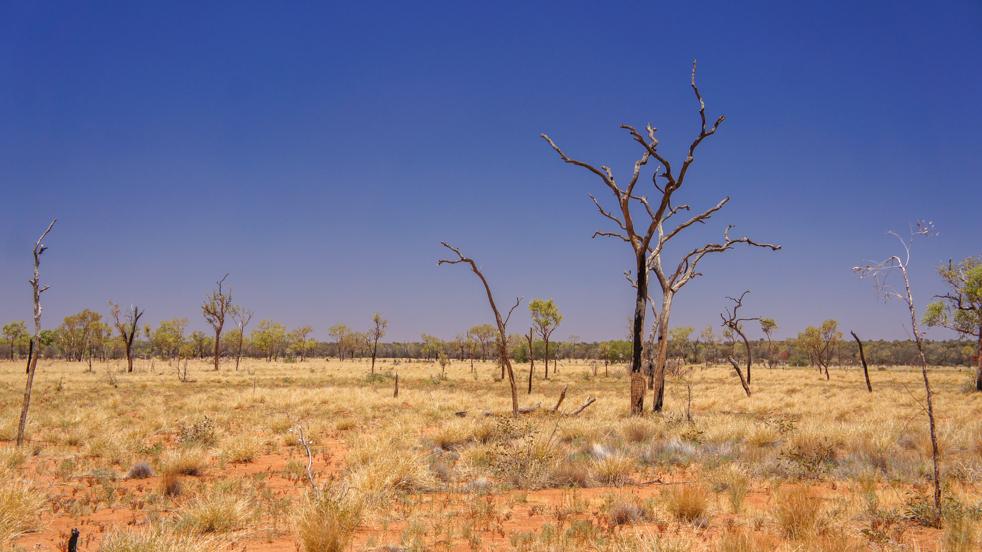 Outback – królestwo przestrzeni