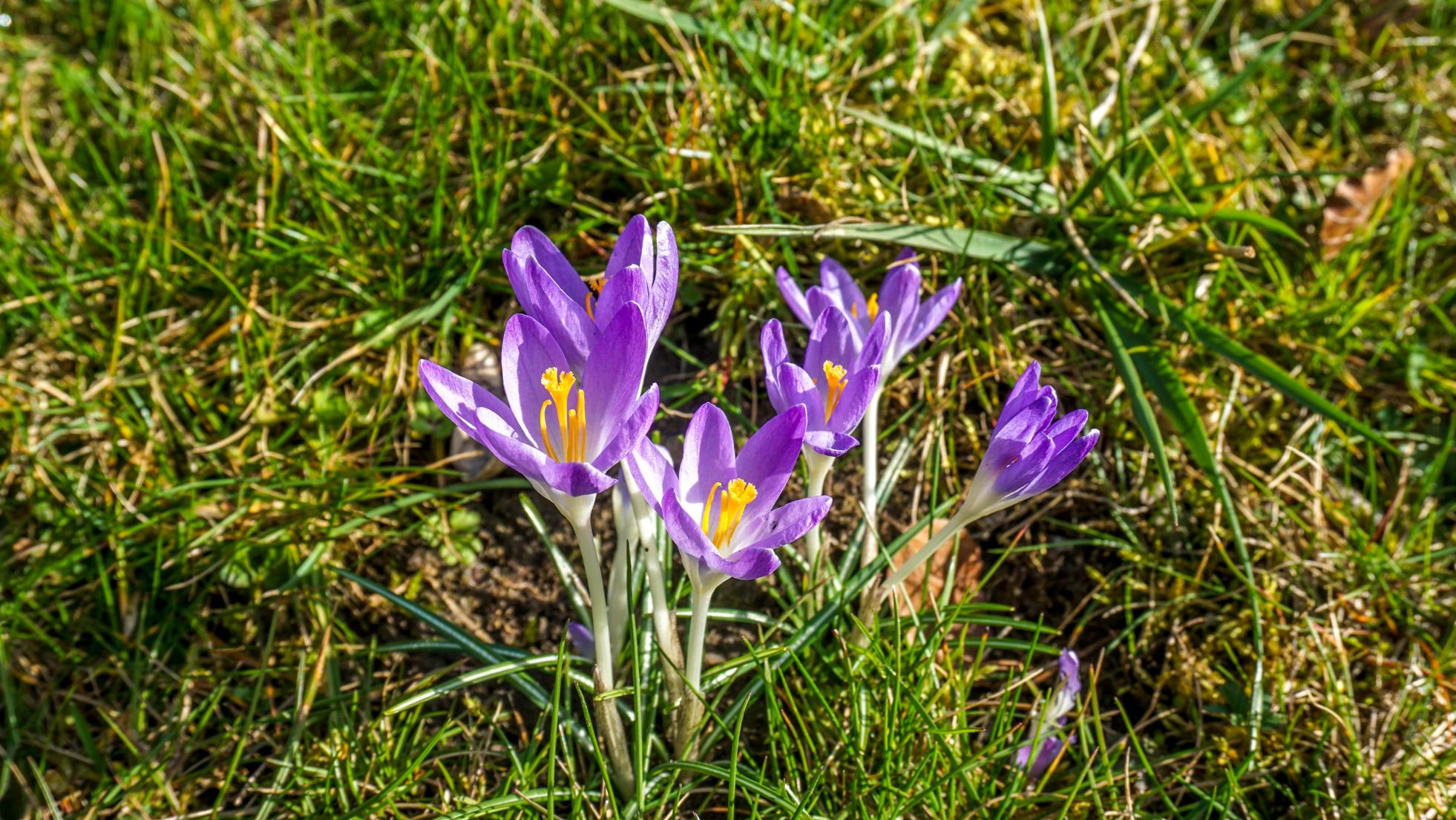 Poczuj wiosnę!