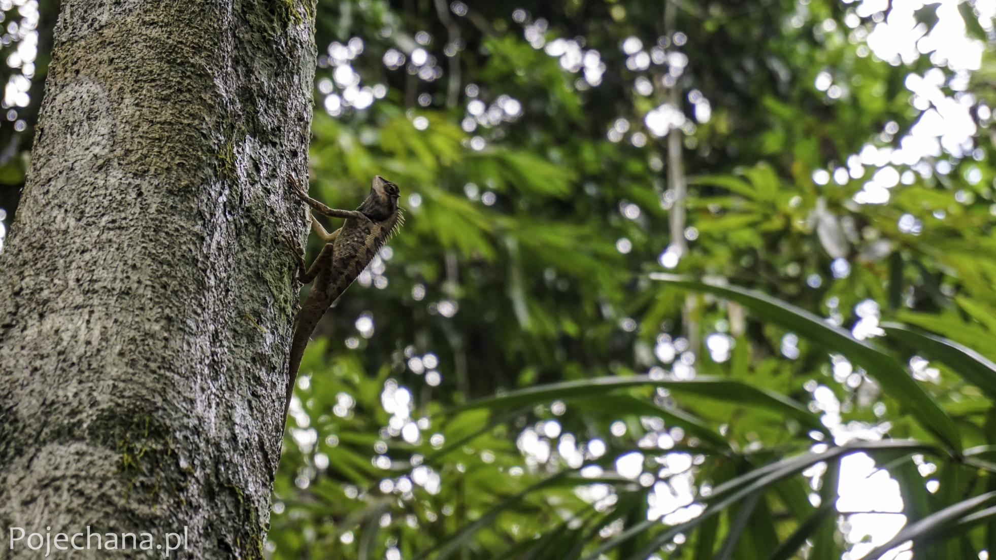 jaszczurka na drzewie